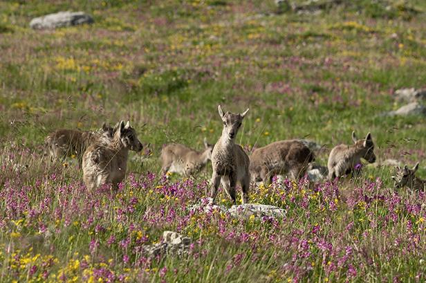 © Parc national de la Vanoise – Michaël Delorme