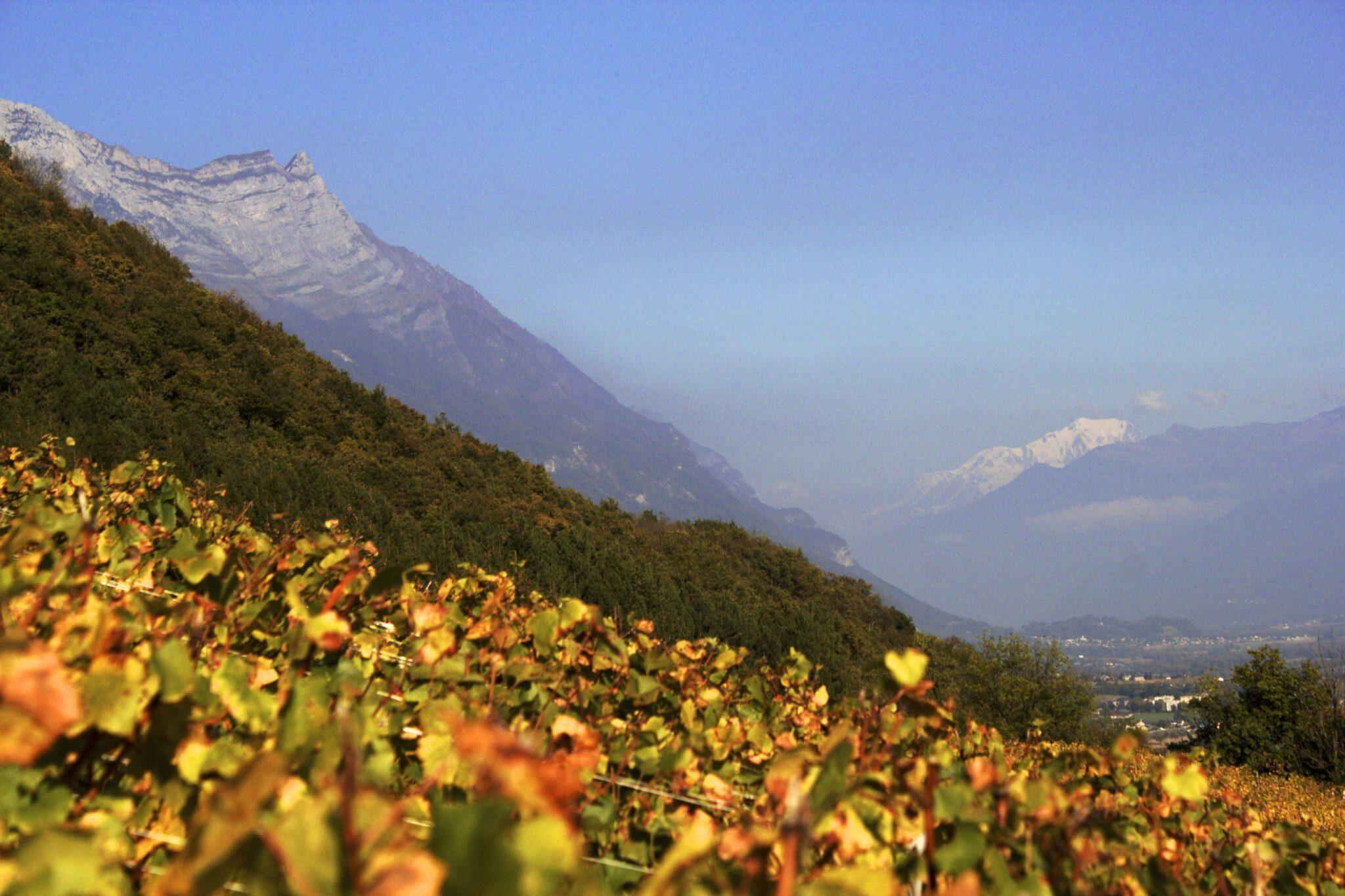 Des vignobles à découvrir en altitude lors du Fascinant Week-end