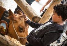 Au Salon de l'agriculture de montagne, on peut caresser les animaux !