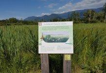 Tout le monde peut observer la faune et la flore du marais de Montfort