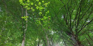 arbres chartreuse